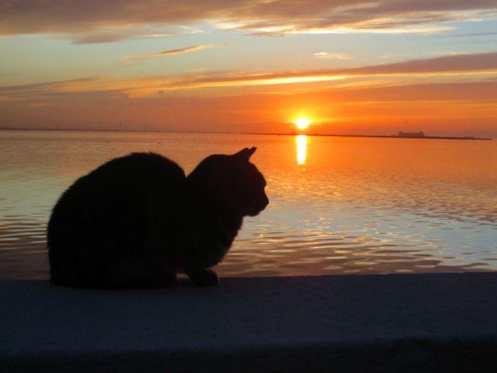Venetsian Buranon saaren upein auringonlasku. Lue lisää: http://marimente.pallontallaajat.net/2015/01/25/buranon-saaren-upein-auringonlasku/