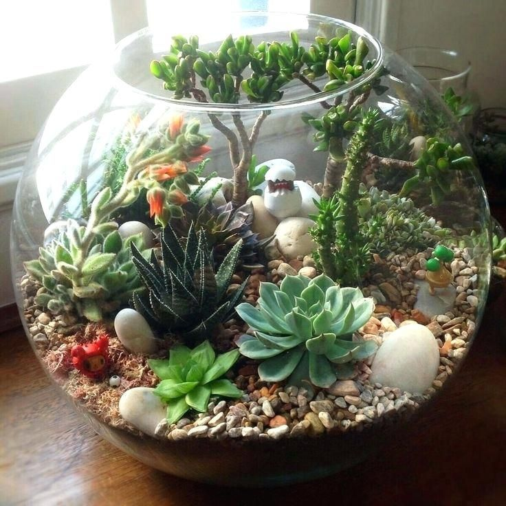 Diy Terrarium Succulent Image Result For Mini Succulent