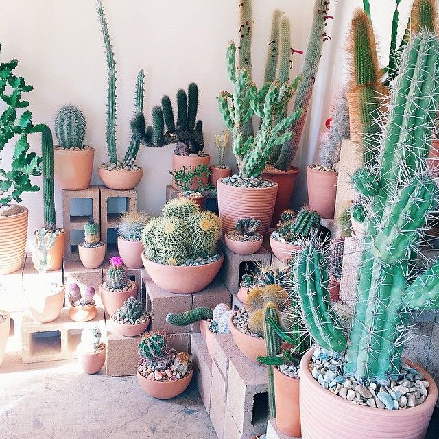 Succulents and cacti are supposed to be the easiest to care for, yet I've never been able to keep one alive for more than a few months! I'd love to see my own collection look like this one day