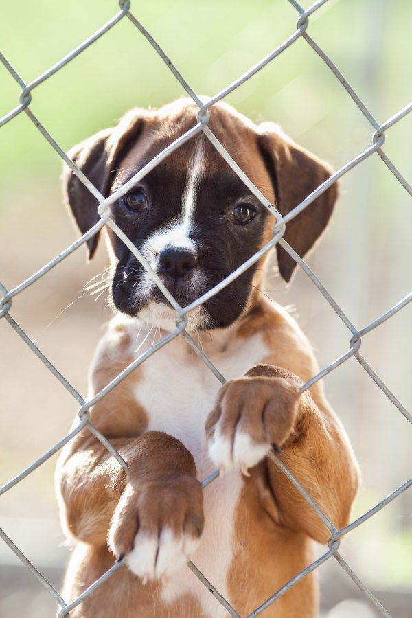 how to train a dog with separation anxiety