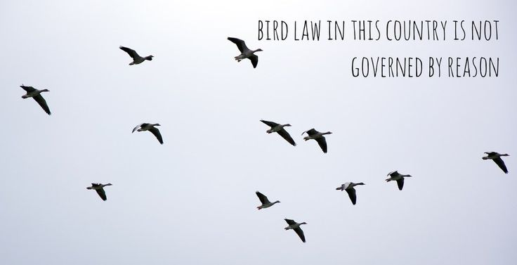 "Because... BIRDLAW If Charlie Kelly Quotes From ""It's Always Sunny"" Were Motivational Posters"