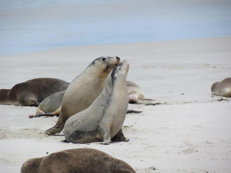 Seal Bay, Kangaroo Island, Australia