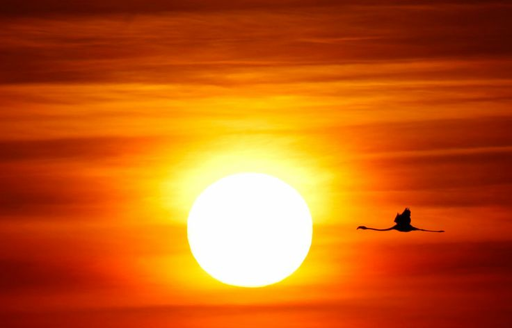 A flamingo flies during sunrise at the Fuente de Piedra natural reserve, near Malaga, in southern Spain August 6, 2011. (Credit: Jon Nazca/Reuters)