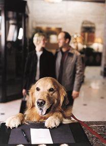 11 Great Pet Friendly Hotels