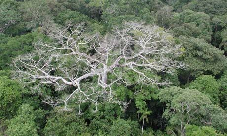 NASA scientists warn that the Amazon rainforest may be showing the first signs of large-scale degradation due to climate change.  An area of rainforest area twice the size of California is experiencing a drought rate that is unprecedented in a century.