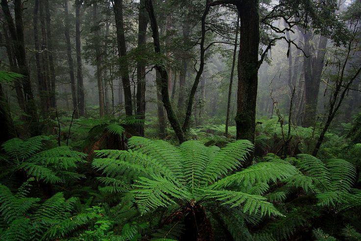 Spectacular tree ferns in the bush around Marysville, Victoria. www.marysvilletourism.com/visit-marysville-apps