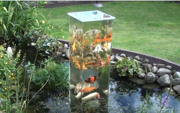 17 Best Images About Fish On Pinterest Spawn Fish For Sale Online And Indoor Pond