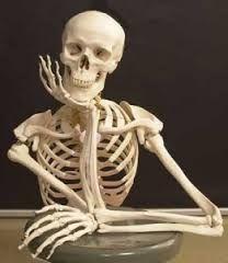 El esqueleto es una estructura natural