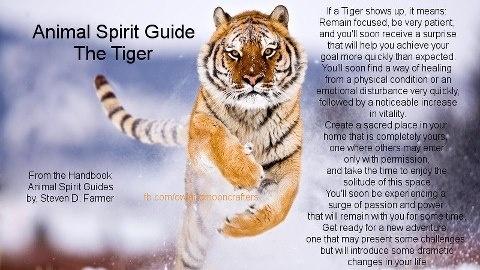 Huck first appeared in our dreams as a playful tiger. His spirit animal is the tiger!---From TIGER MEDICINE board.