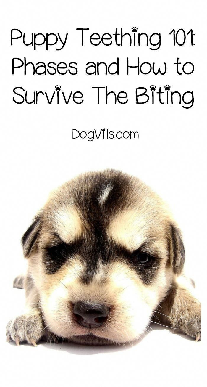 How To Deal With Aggressive Dog Behavior Problems Puppy Teething Puppy Training Puppy Biting