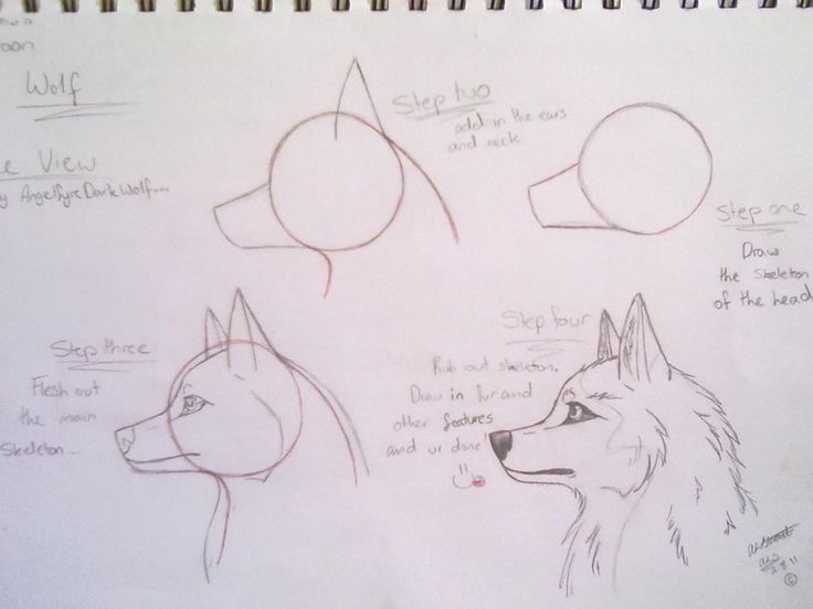 how to draw wolves | how to draw a cartoon wolf by AngelfyreDarkWolf