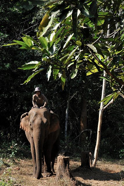 VIDA Statement Clutch - Jungle Elephant Temple by VIDA D287VRM8t