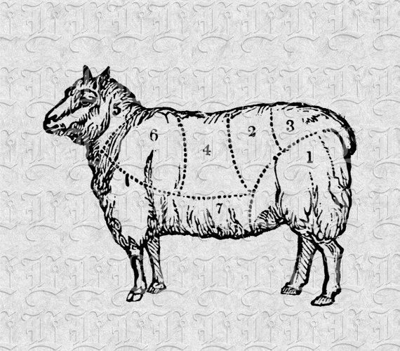Goat Meat Butcher Chart Vintage Illustration Food Clip Art Sale Antique Victorian Graphics 0337