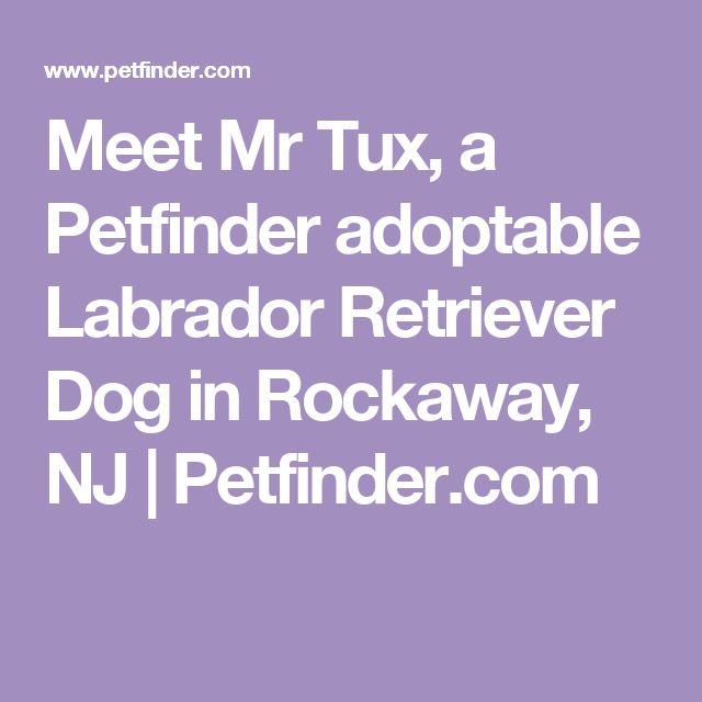 Meet Mr Tux, a Petfinder adoptable Labrador Retriever Dog in Rockaway, NJ | Petfinder.com