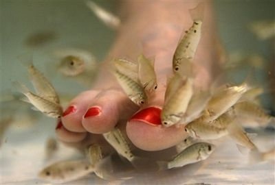 I wonder how fish pedicures would take off in Union City?? ewww.... I don't want tiny carp eating my dead skin.