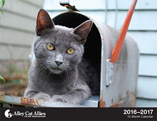 Save cats' lives! - Alley Cat Allies