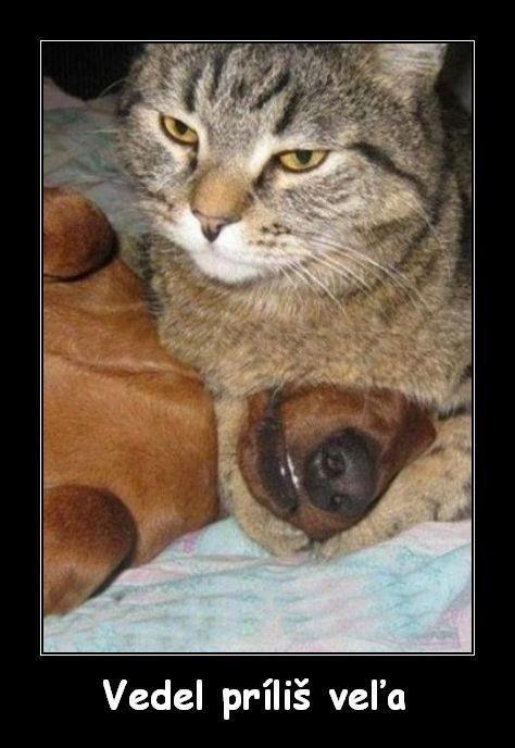 Kreslene Vtipy Obrazky Srandicky Funny Animals Funny Cats A