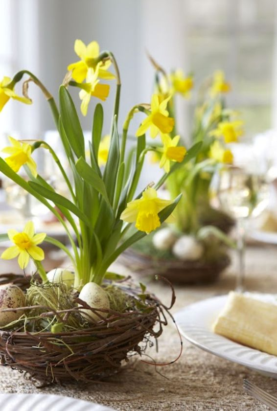Tiny daffodils in nest with eggs and moss for Easter or spring tablescape