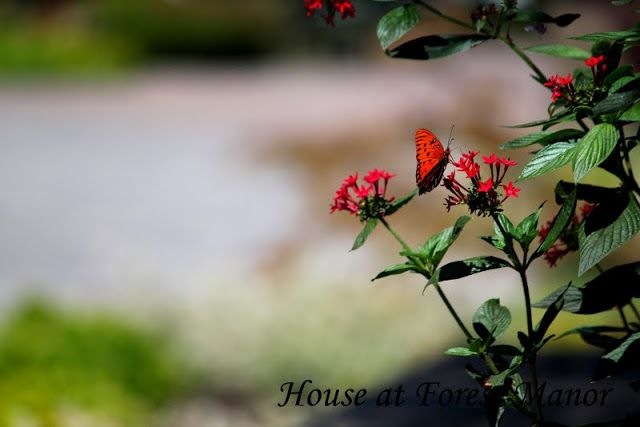 House at Forest Manor: Summer's End
