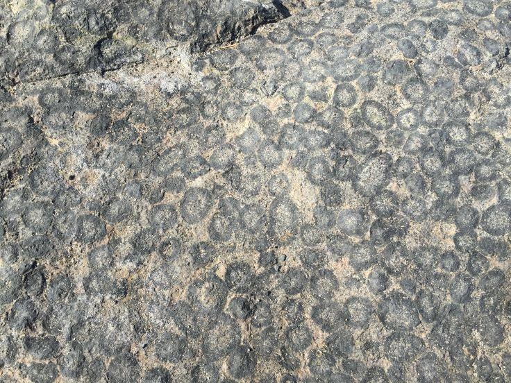Granito Orbicular .- Rocas.
