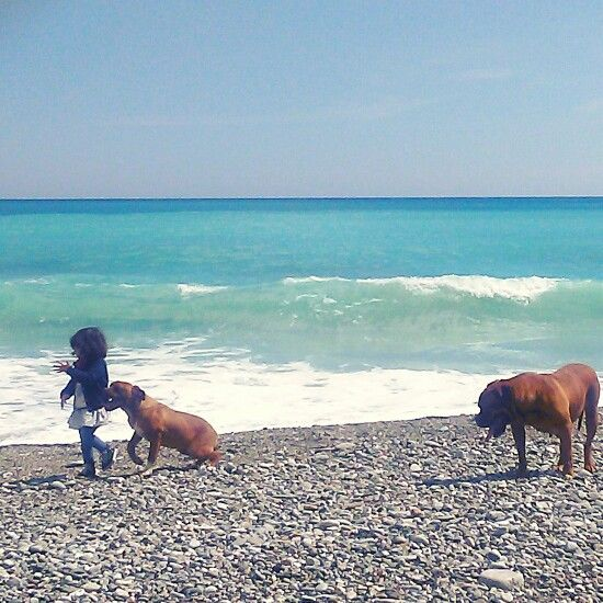 Baby girl and friends margot and flemma, mom and daughter dog the bordeaux family. A nice morning in a sicilian beach