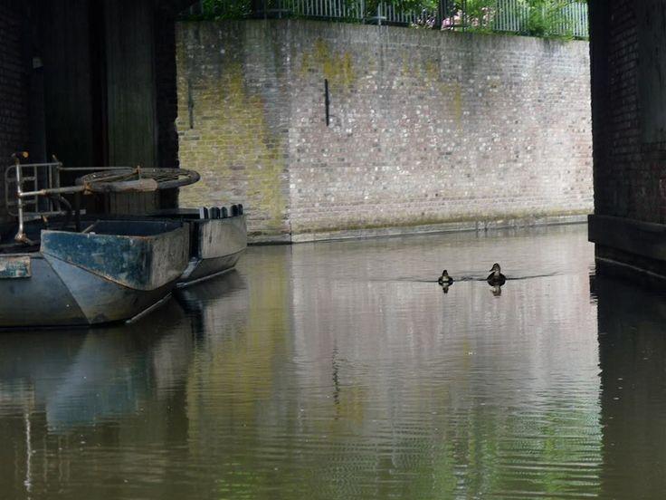 ~Shannon Brockhurst 2013, Netherlands 'S-Hertogenbosch, roer, canal