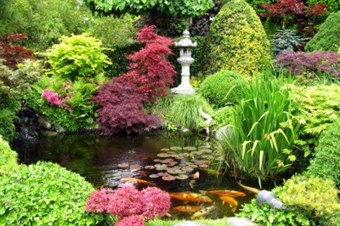 Japan Garden Flowers: Beautiful Japanese Garden And Koi Pond