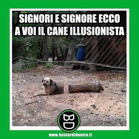 😂 Tagga i tuoi amici e #condividi #bastardidentro #cane #illusione #mago www.bastardidentro.it