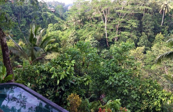 Villa Awang Melah | 1 bedroom | One of Villa Awang Awang Collection | Melayang, Ubud, Bali #infinitypool #ubud #bali #honeymoon