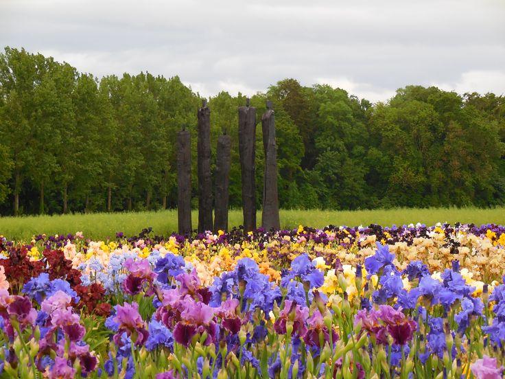 Les iris et un groupe de sculptures de Christian Lapie (2014)