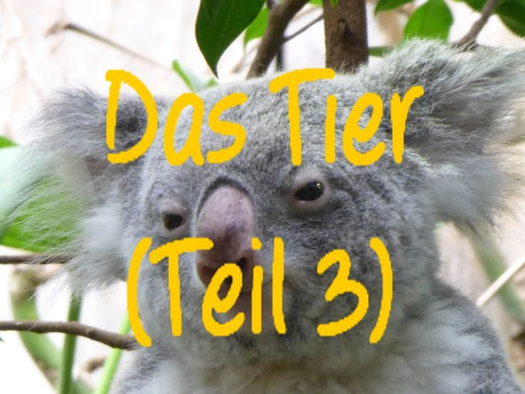 Learn German: Das Tier (Teil 3)