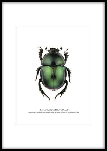 affisch, plansch med grön skalbagge