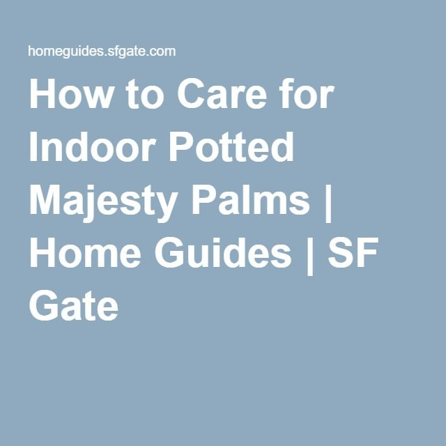How to Care for Indoor Potted Majesty Palms | Home Guides | SF Gate