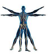 How Resveratrol Stops Bone Loss.  www.jusuru.com/rudisill