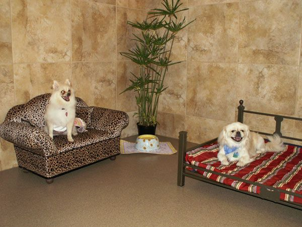 luxury dog hotel u2013 a suite for each of my future dogs like the the golden leash haven pinterest dog boarding dog and grooming salon