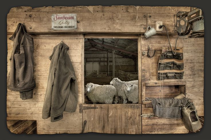 The Waiting Room - by Nathan Secker. Sheep shearing in New Zealand. Available from www.imagevault.co.nz