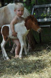 Little buddiesMiniatures Horses, Baby Horses, The Farms, Minis Hors, Children, 2 Years Old, Kids Fun, Little Boys, Animal