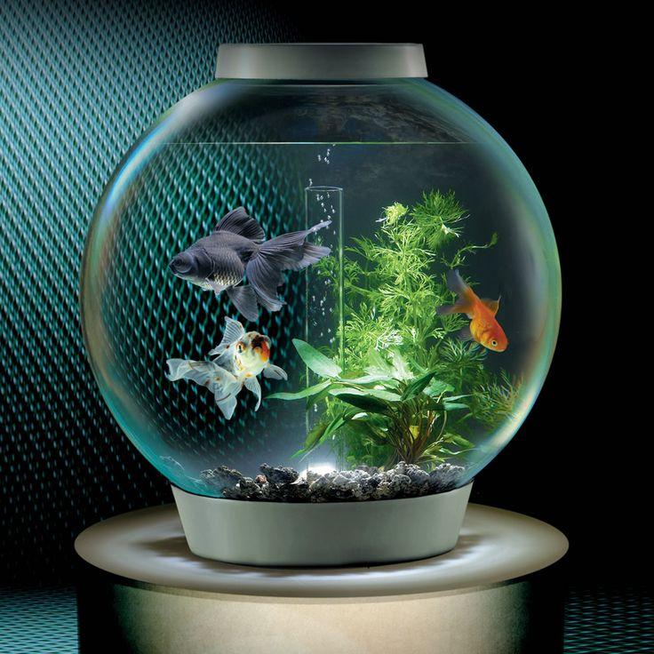 The Low Maintenance Clear View Aquarium - Hammacher Schlemmer
