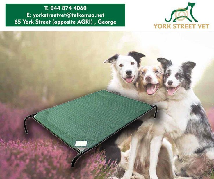 Get your pet the #Coolaroo Elevated Pet Bed, and make sure he has a peaceful rest every night. For more information, call #YorkStreetVet on 044 874 4060 or visit us at 65 York Street, George. #ilovemydoghttps://www.facebook.com/Yorkstreetvetshop/photos/pb.646016452164207.-2207520000.1439134251./808339025931948/?type=3