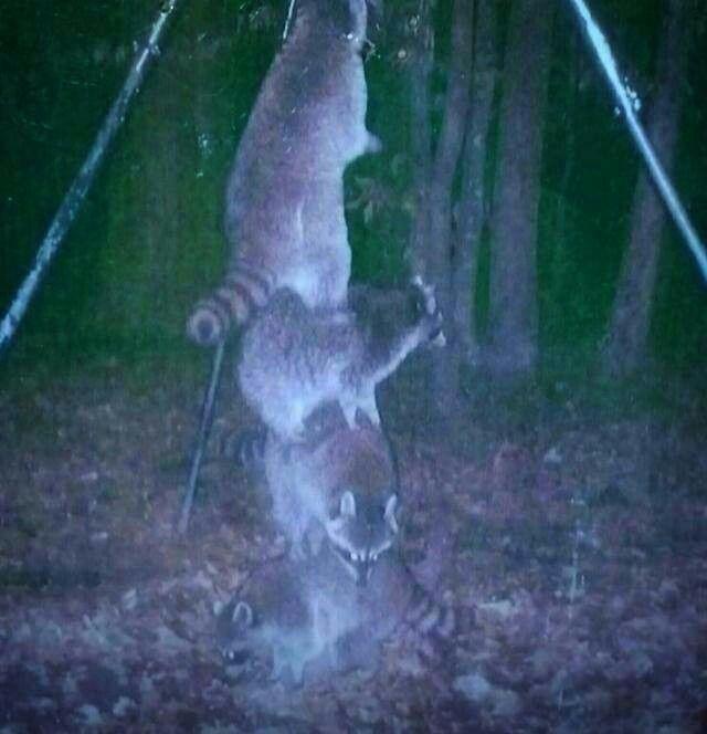 15 best images about deer feeder on pinterest for Homemade deer feeders pvc pipe