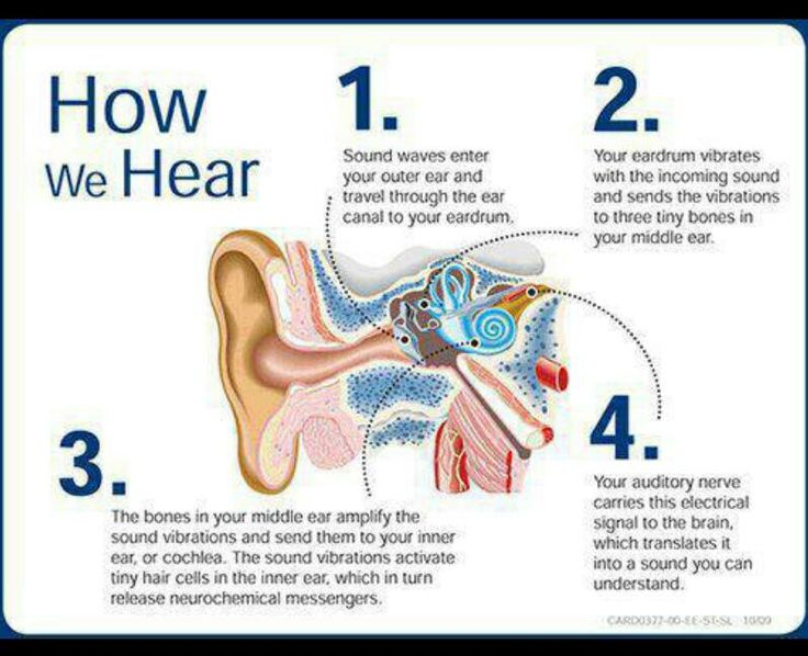 How we hear with the ears  -Northgate Hearing Services