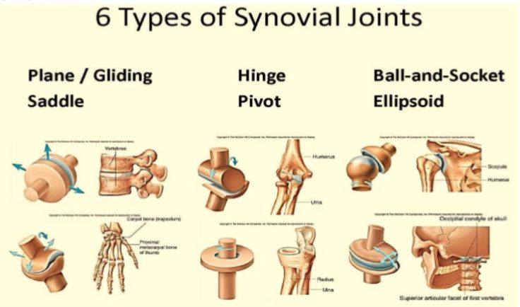 Different joints have different degrees of freedom (movement in a place), which is determined by the structure of articular surfaces and strength and tautness of ligaments, tendons and capsule. Ball and socket joins have 3 degrees of freedom. Gliding, saddle, condyloid all have 2 degrees of freedom. Pivot and hinge joints have 1 degree of freedom.