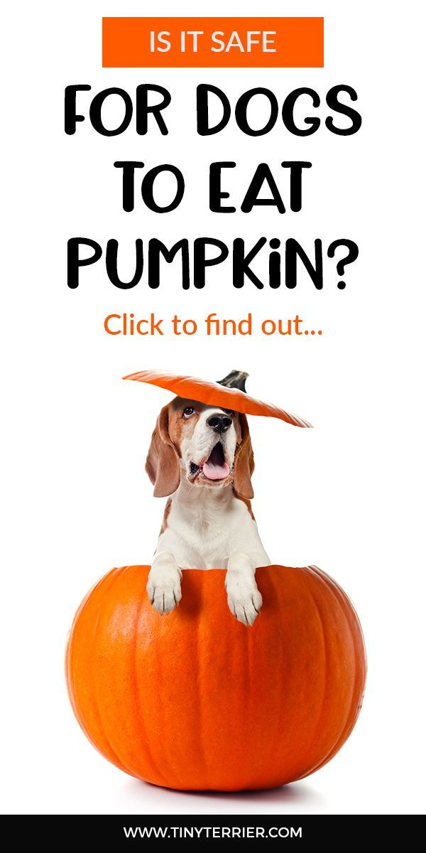 how to feed your dog pumpkin