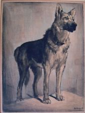 SZIKLAY BELA Hungary OLD ENGRAVING - GERMAN SHEPARD DOG