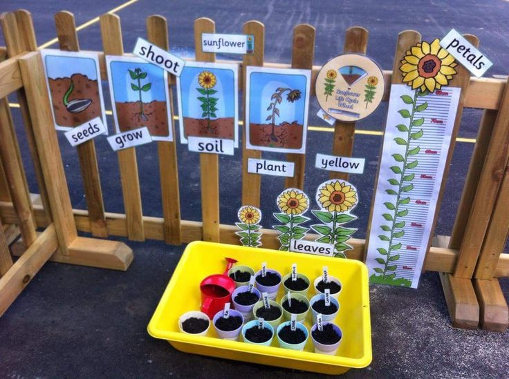 This Life cycle of a sunflower display is a wonderful idea if you don't have much space! Also a great way of taking the lesson out doors. Download all these resources from Twinkl.