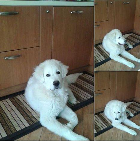 Cucciolone di 6 mesi a Mestre cerca adozione