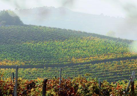 Ricco di storia e leggende, quello dei Colli Euganei, nel Padovano, è da qualche tempo anche un territorio che si distingue per grandissimi vini. A partire dal raro Fior D'Arancio, senza dimenticare ottimi rossi e passiti