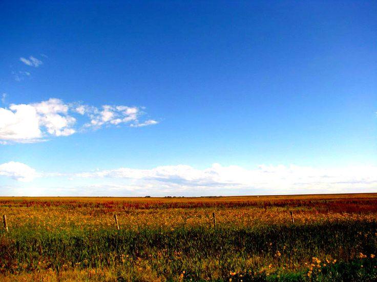 Open fields -West Gwillimbury