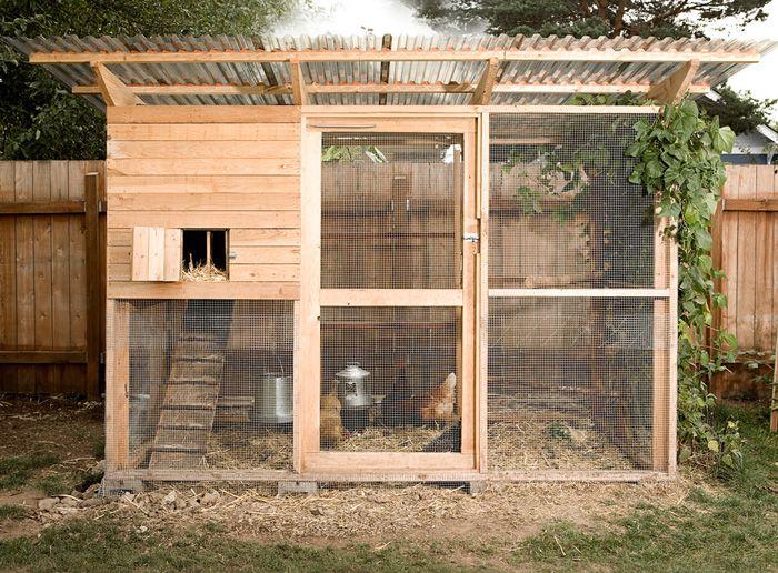 Quail pen chicken coop plans north carolina garden coop for Backyard chicken coop plans