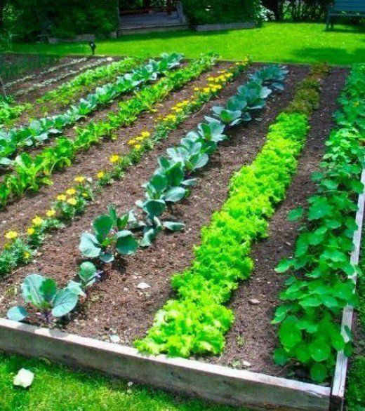 oasis mobiliario jardim:If you want to know exactly how to grow a vegetable garden here is all